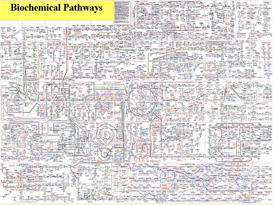 These are metabolic pathways in your body