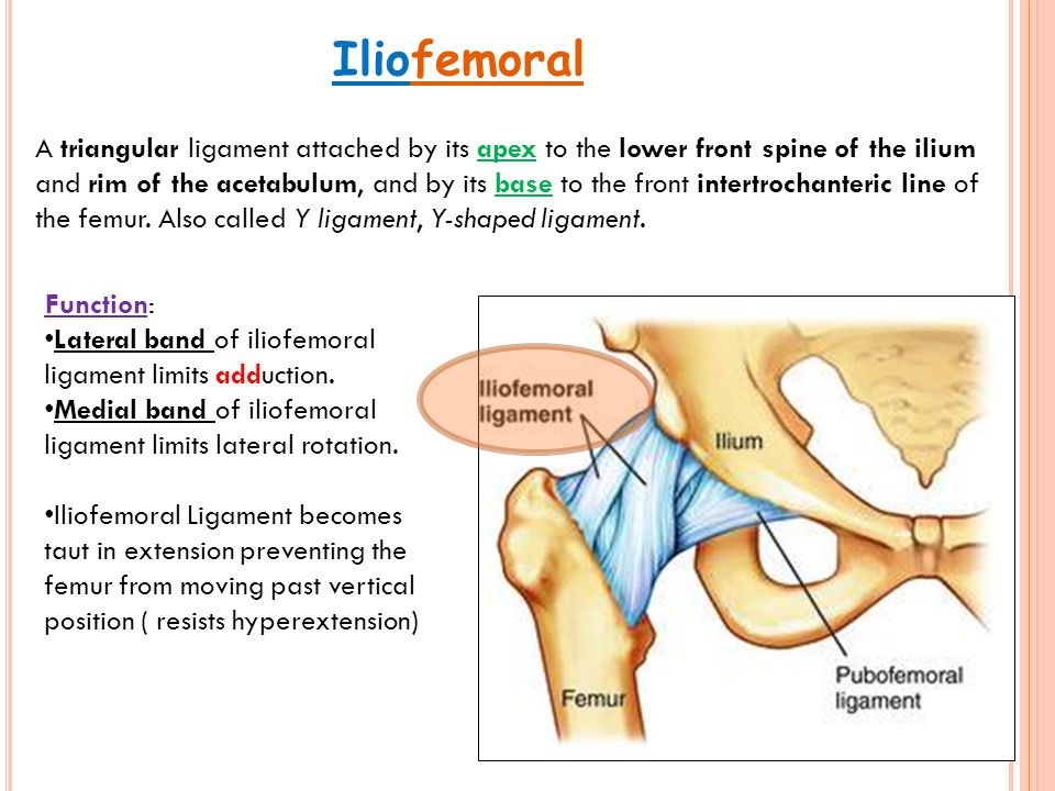 Painful Hip By : Haitham Mohammed. - ppt video online download