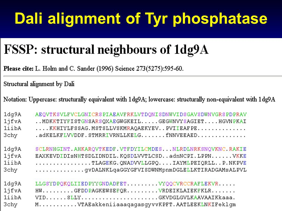 Dali alignment of Tyr phosphatase