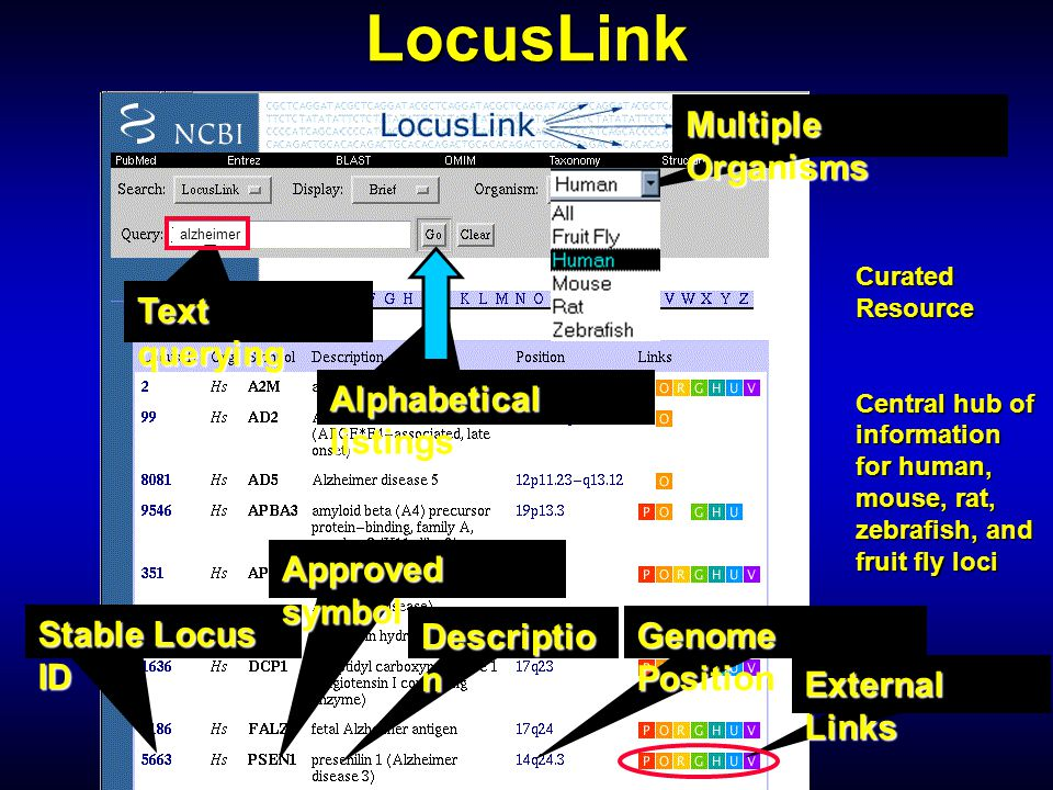 LocusLink Multiple Organisms Text querying Alphabetical listings