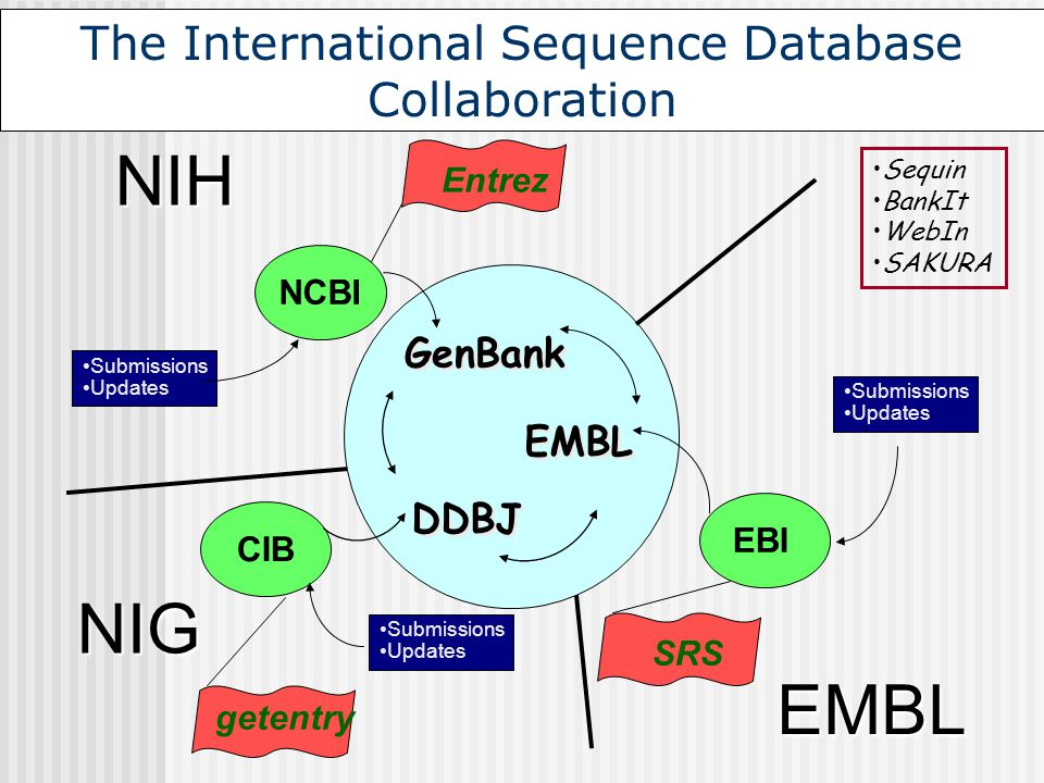 Ncbi molecular biology resources ppt download 2 the international sequence database collaboration stopboris Image collections
