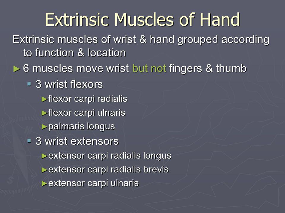 Elbow, Wrist & Hand Evaluation - ppt video online download