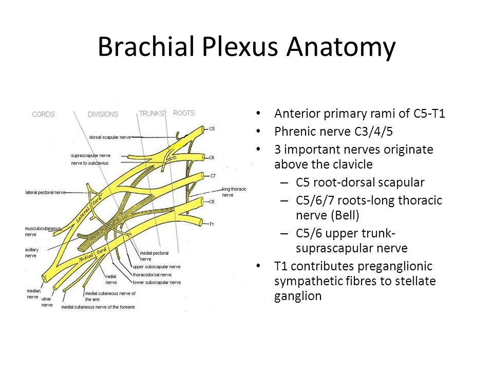 Traumatic Brachial Plexus Injury: Assessment and Management - ppt ...
