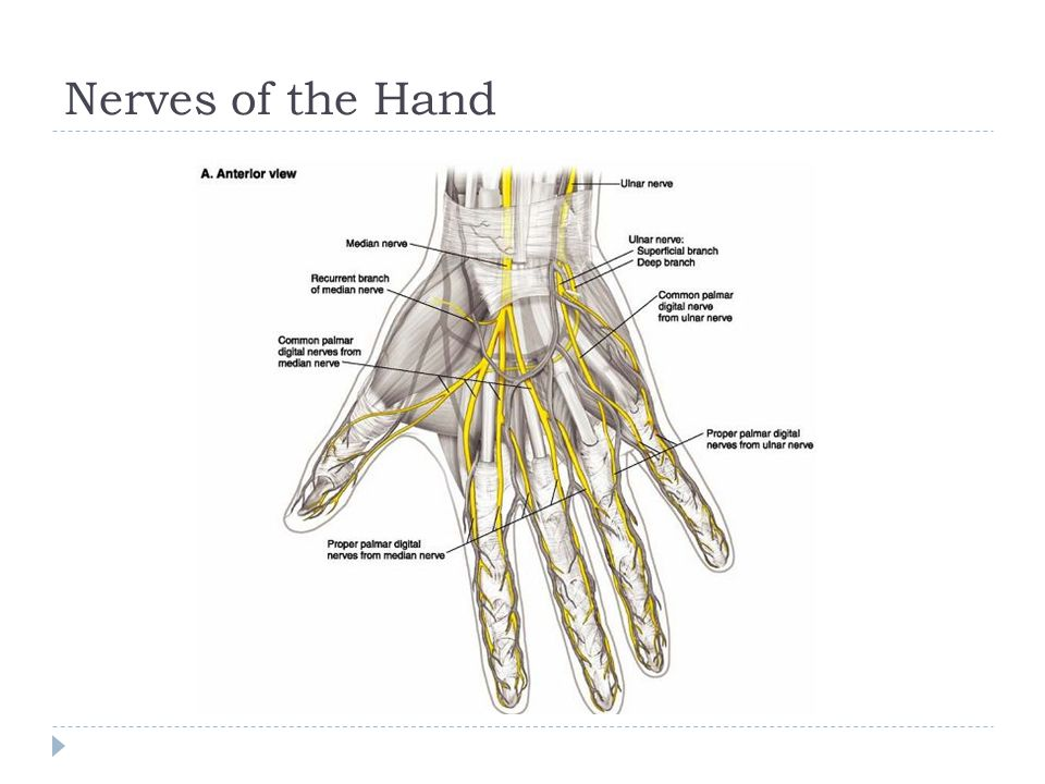Nerves of the upper limbs - ppt video online download