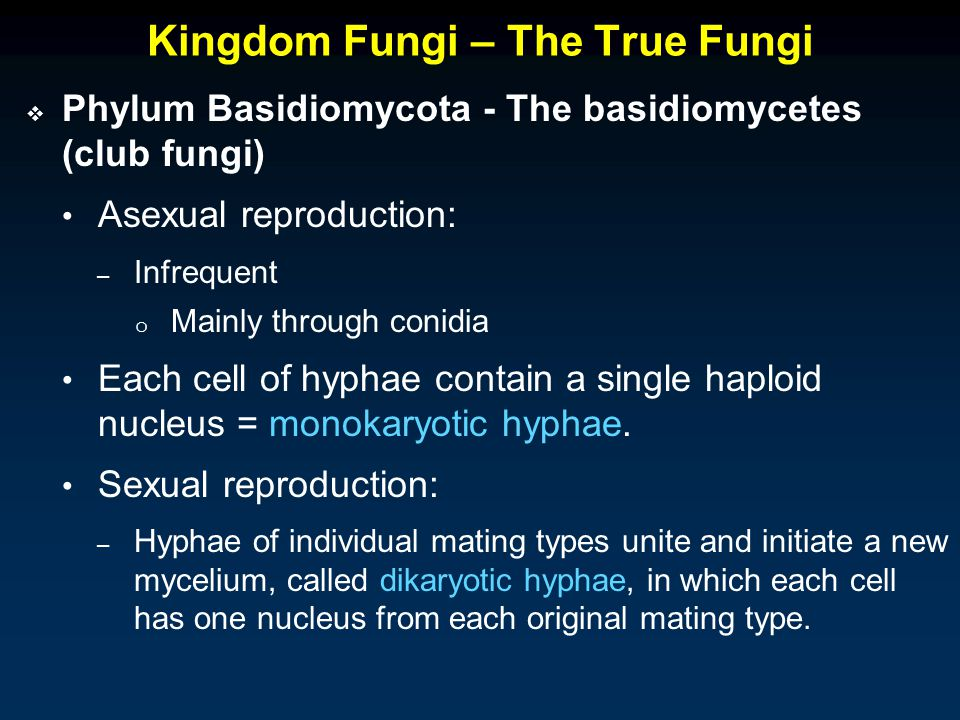 Asexual reproduction in true fungi