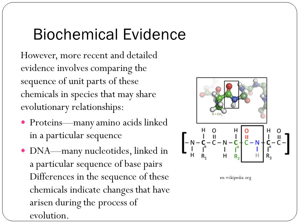 Blueprint of Life Topic 4: Evidence to Support the Theory of ...