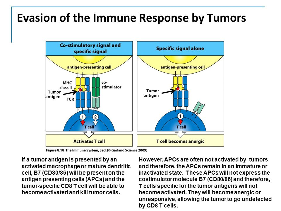 Evasion of the Immune Response by Tumors