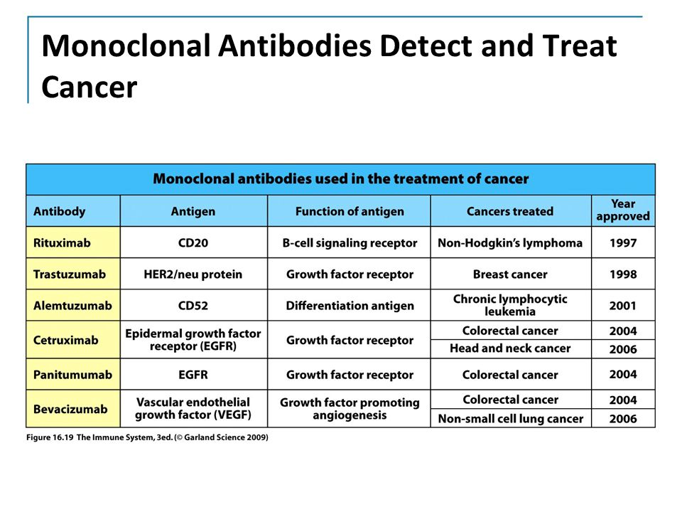 Monoclonal Antibodies Detect and Treat Cancer