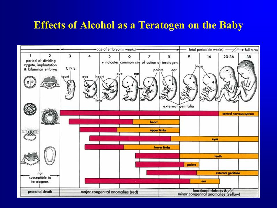 Effects of Alcohol as a Teratogen on the Baby