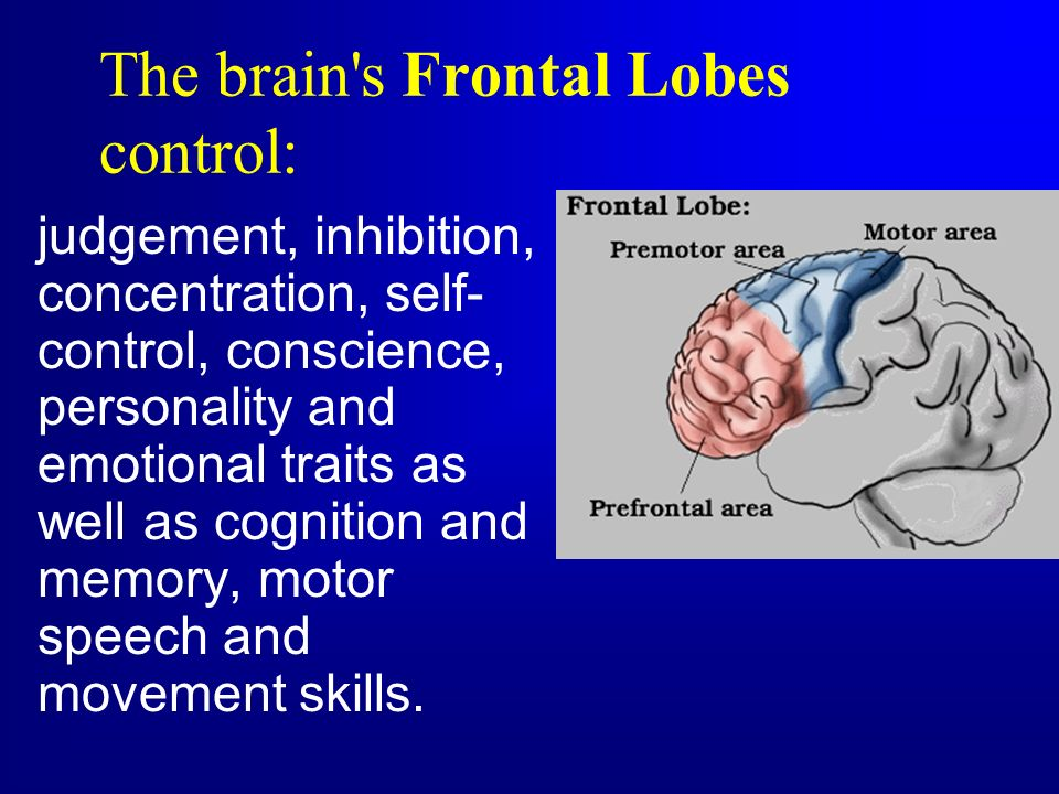 The brain s Frontal Lobes control: