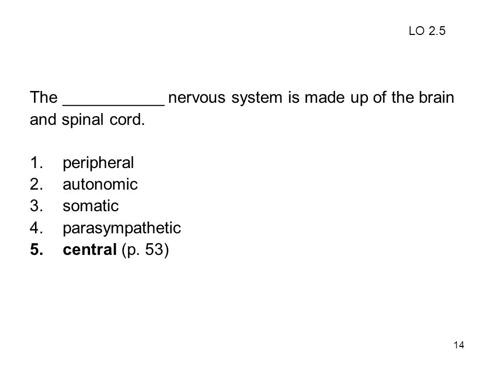 The ___________ nervous system is made up of the brain
