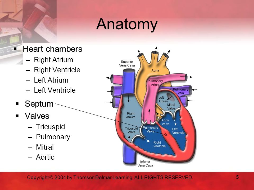 Dho Unit 68 Anatomy And Physiology Circulatory System Ppt Video