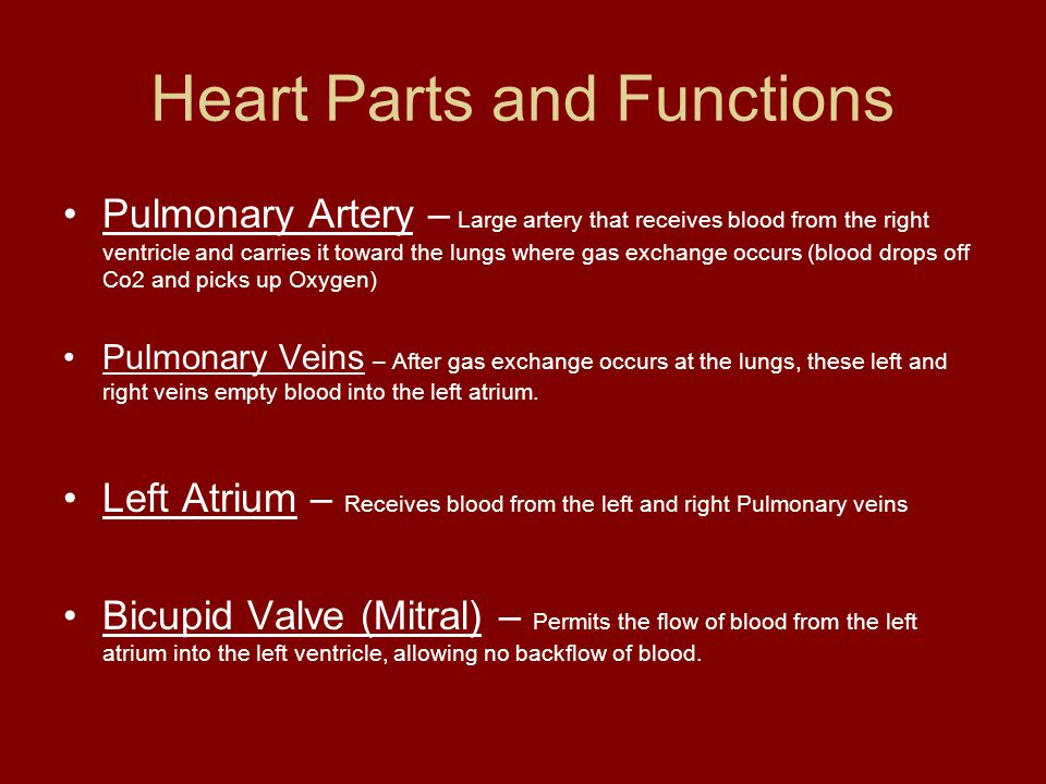 Blood Circulation Ppt Video Online Download