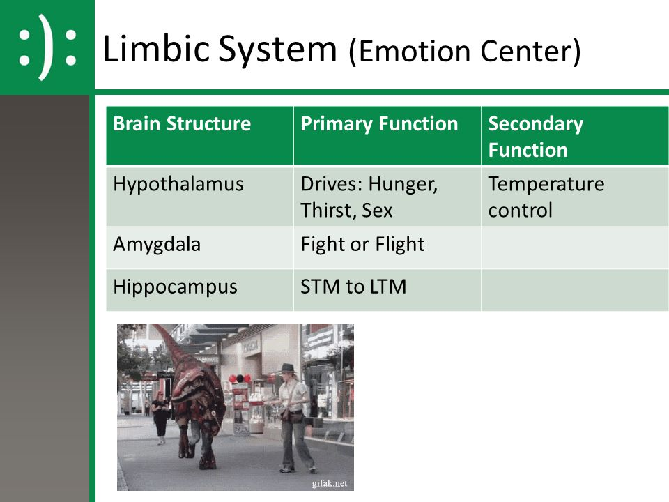 Limbic System (Emotion Center)