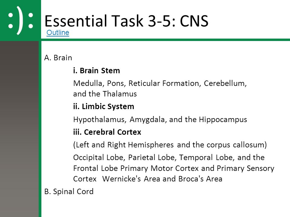 Essential Task 3-5: CNS A. Brain i. Brain Stem