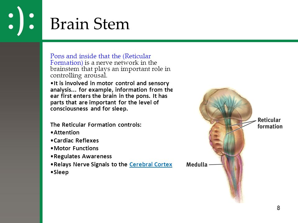Brain Stem Pons and inside that the (Reticular Formation) is a nerve network in the brainstem that plays an important role in controlling arousal.