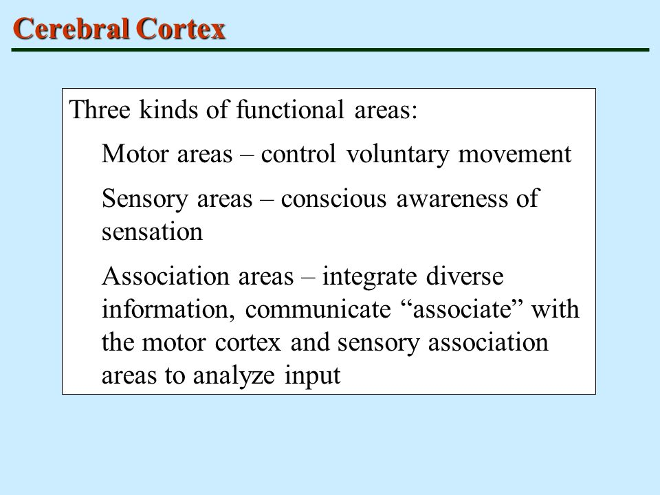 Cerebral Cortex Three kinds of functional areas: