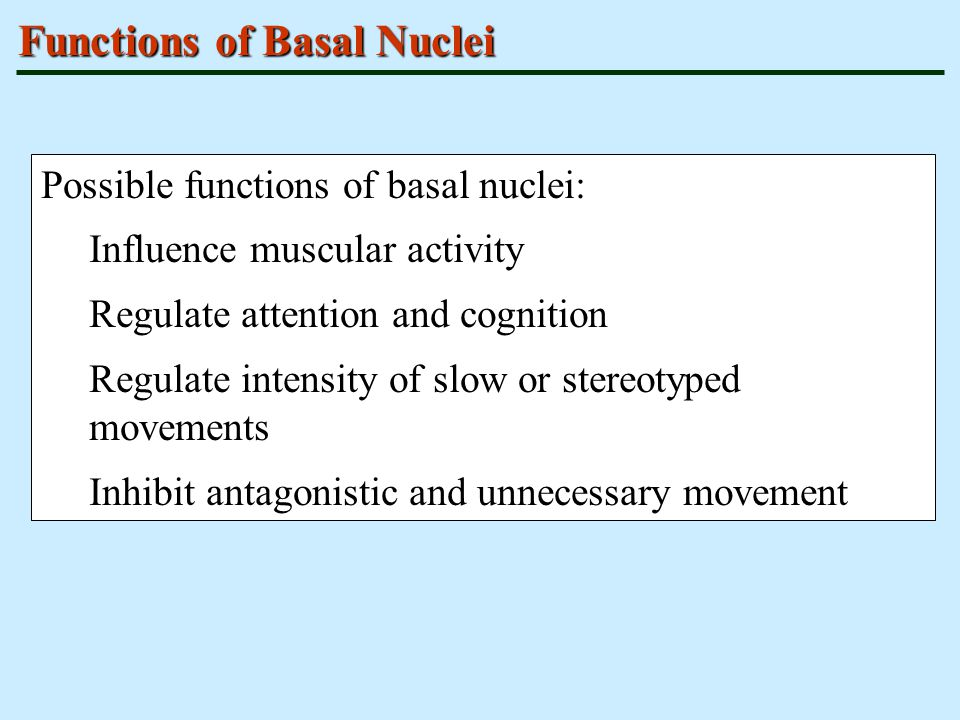 Functions of Basal Nuclei