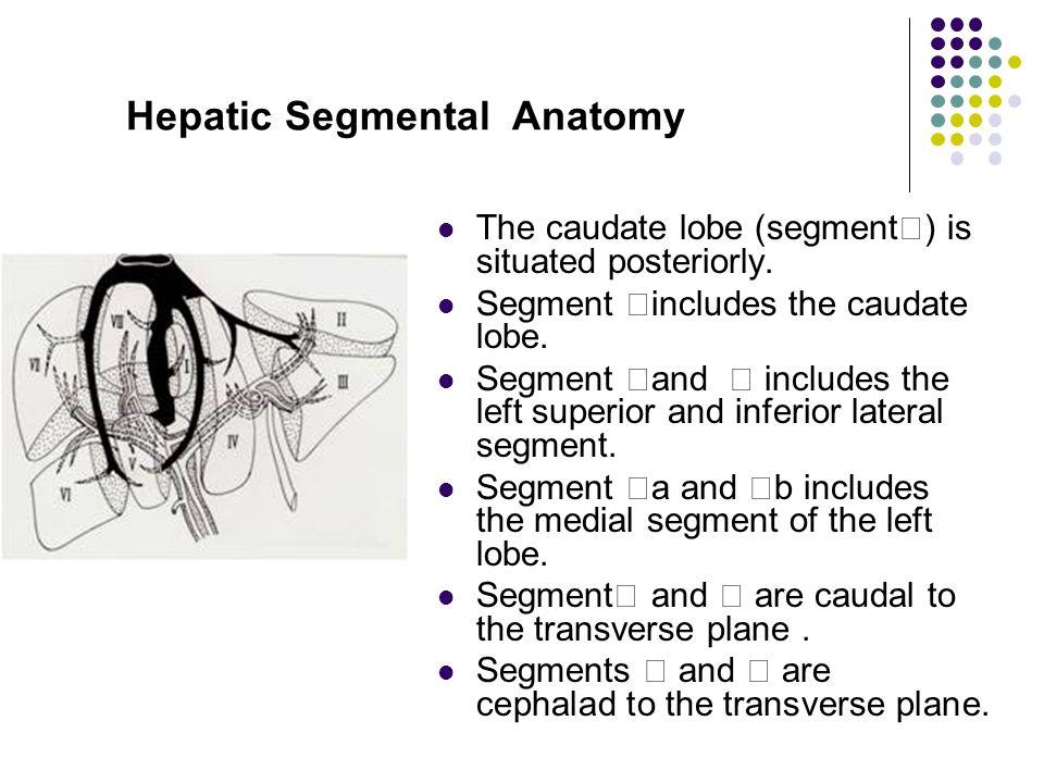 Abdominal Imaging Of Liver Ppt Video Online Download
