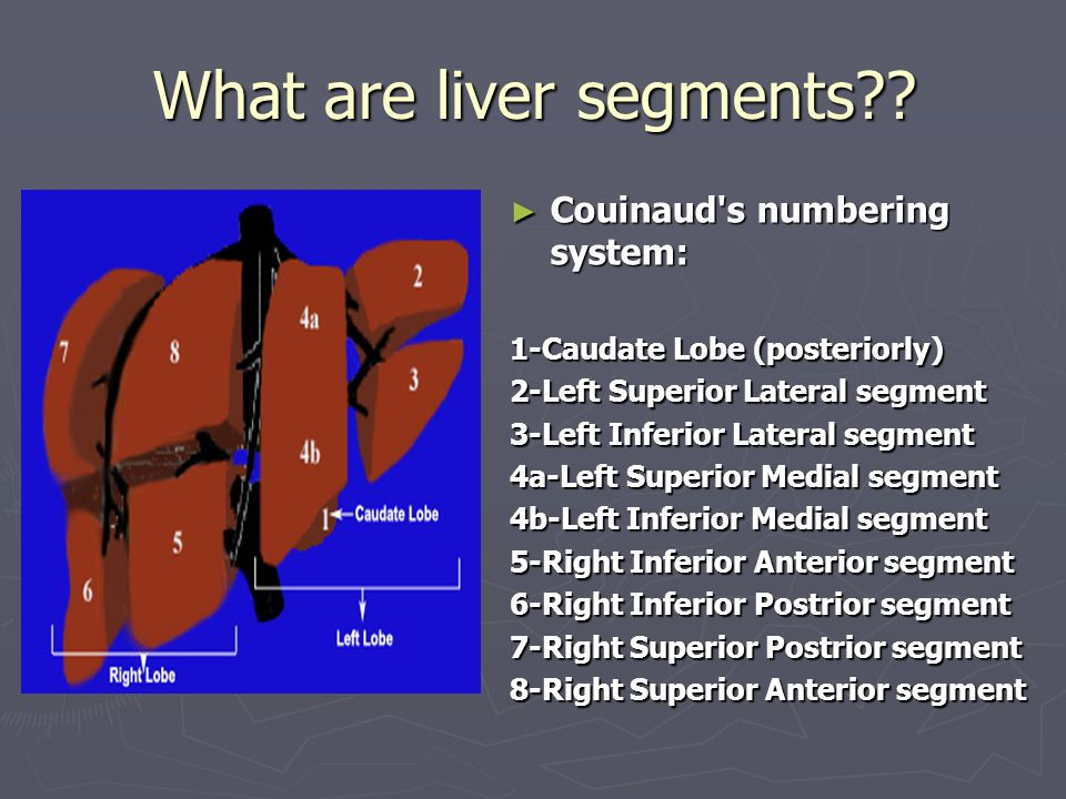 What Is The Liver An Organ In The Upper Abdomen That Aids In