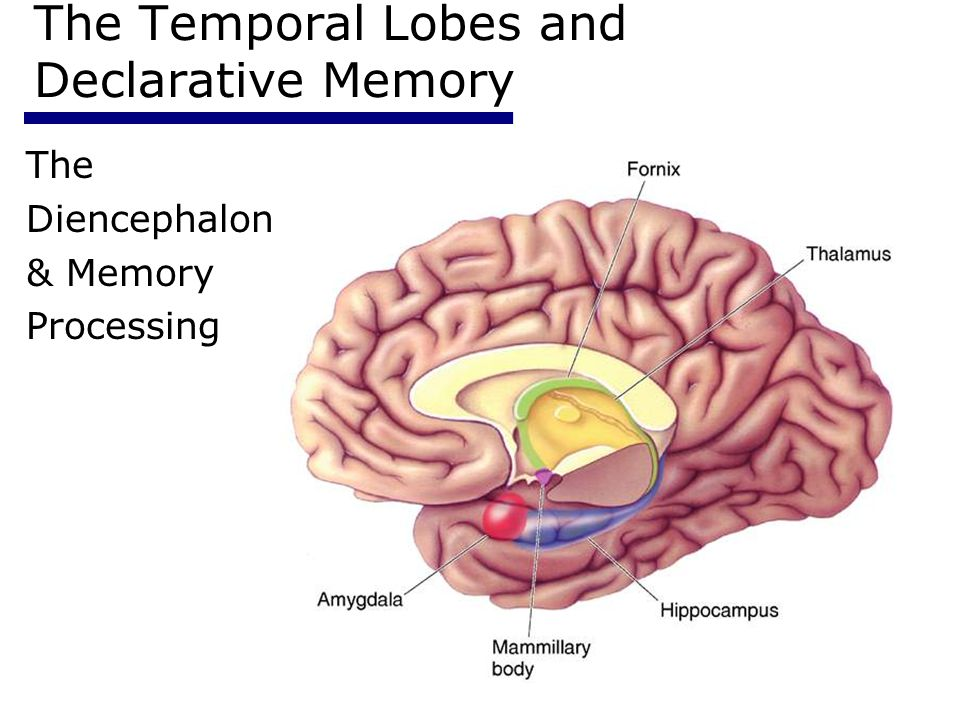 12 Memory Systems Psychology ppt video online download