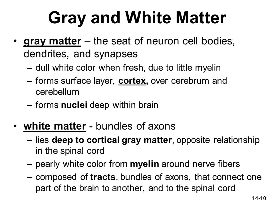 Gray and White Matter gray matter – the seat of neuron cell bodies, dendrites, and synapses. dull white color when fresh, due to little myelin.