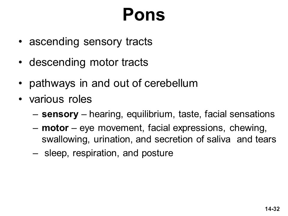 Pons ascending sensory tracts descending motor tracts