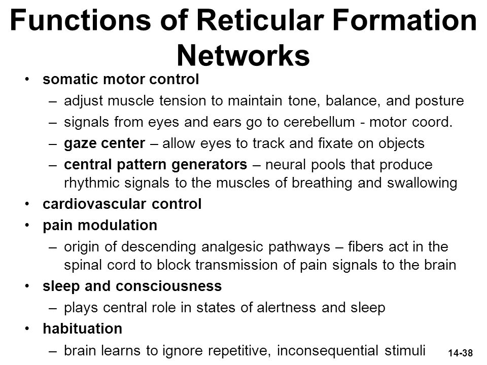 Functions of Reticular Formation Networks