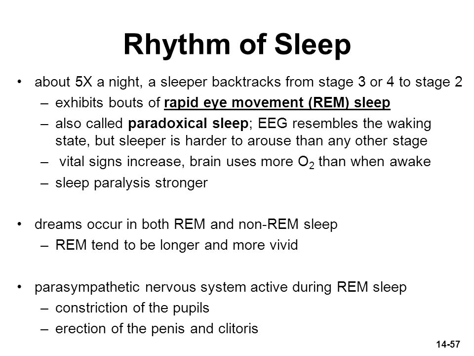 Rhythm of Sleep about 5X a night, a sleeper backtracks from stage 3 or 4 to stage 2. exhibits bouts of rapid eye movement (REM) sleep.