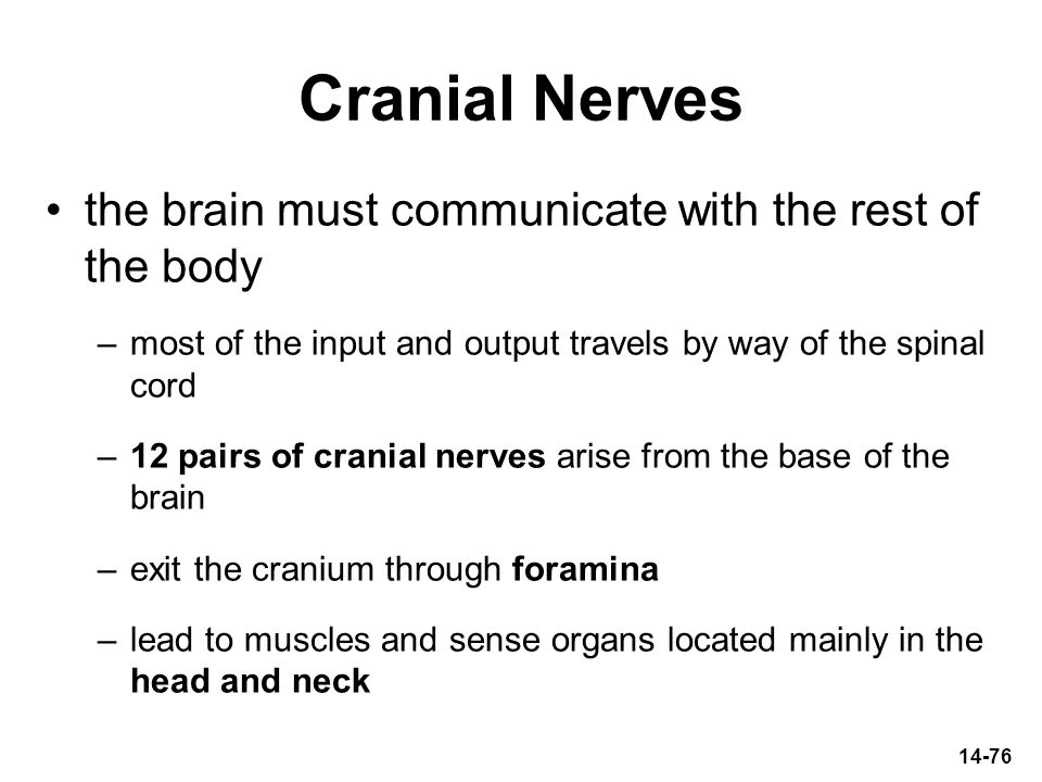 Cranial Nerves the brain must communicate with the rest of the body