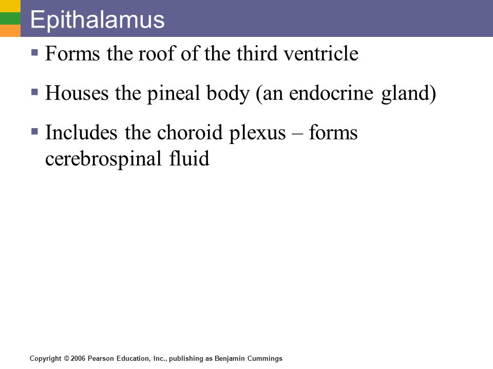 Epithalamus Forms the roof of the third ventricle