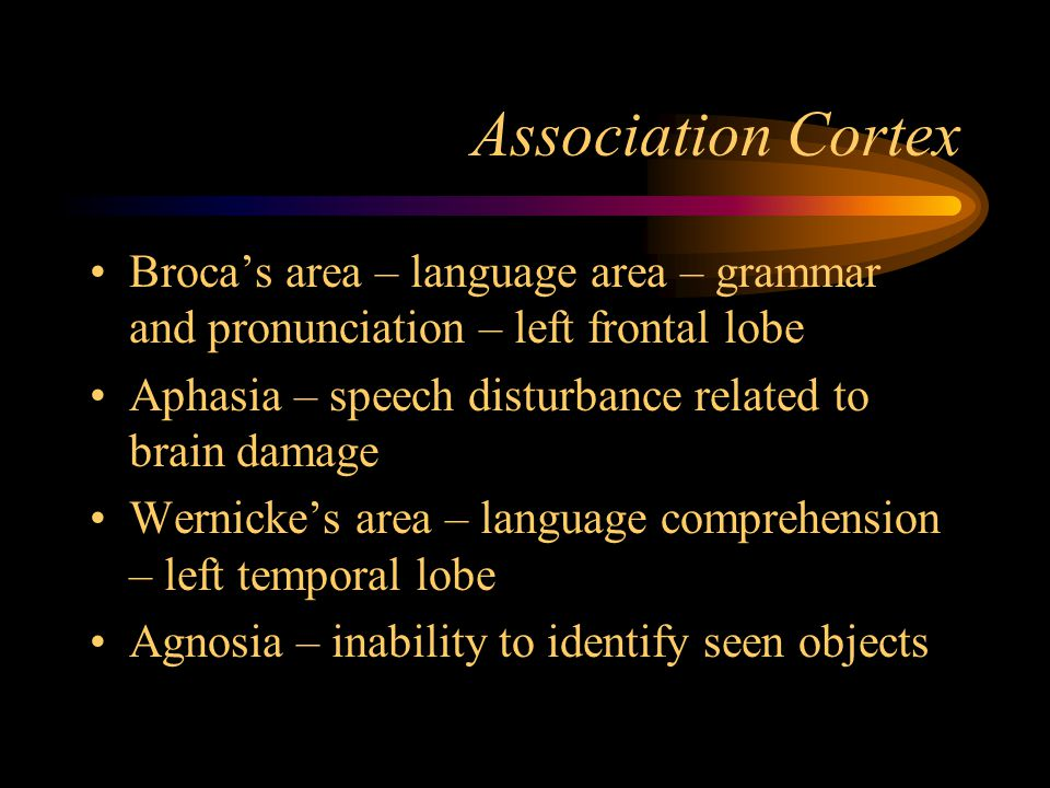 Association Cortex Broca's area – language area – grammar and pronunciation – left frontal lobe.