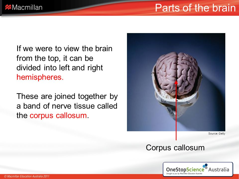 Parts of the brain If we were to view the brain from the top, it can be divided into left and right hemispheres.