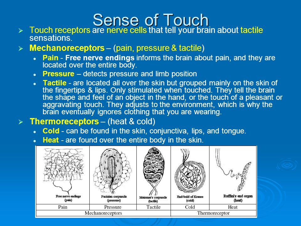 Sense of Touch Touch receptors are nerve cells that tell your brain about tactile sensations. Mechanoreceptors – (pain, pressure & tactile)
