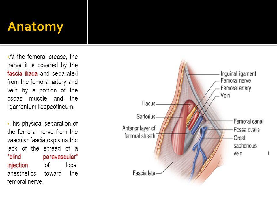 Modern Fascia Iliaca Block Anatomy Component - Anatomy And ...