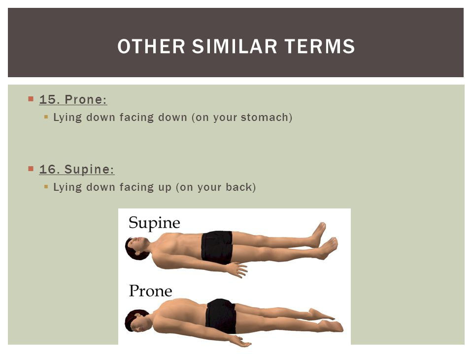 Other similar terms 15. Prone: 16. Supine: