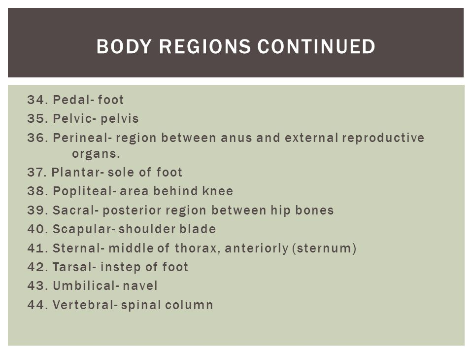 Body regions continued