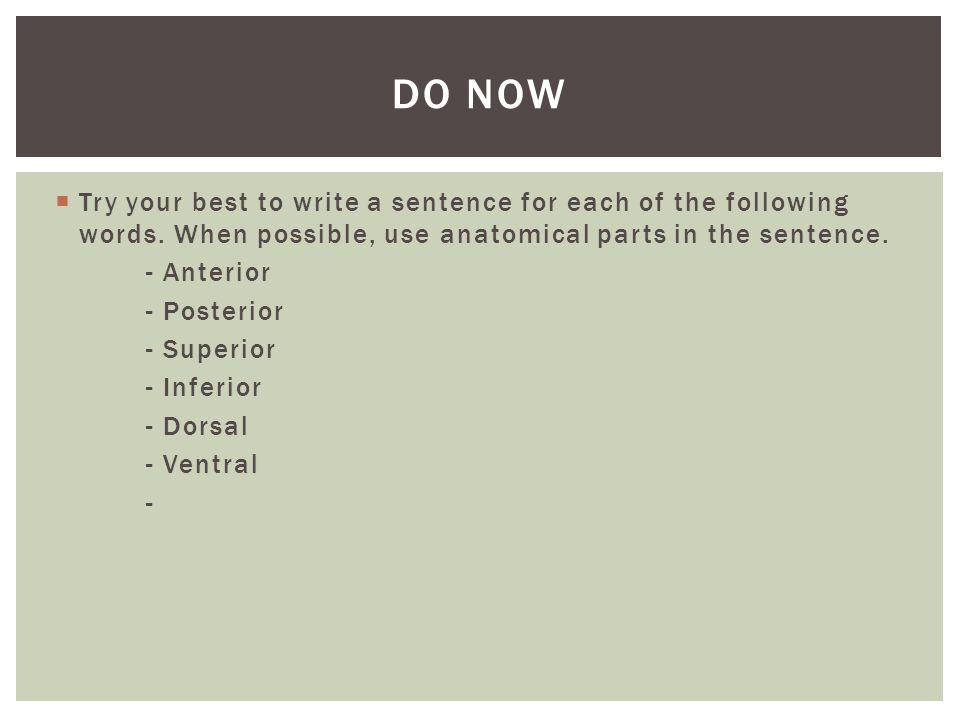 Do Now Try your best to write a sentence for each of the following words. When possible, use anatomical parts in the sentence.