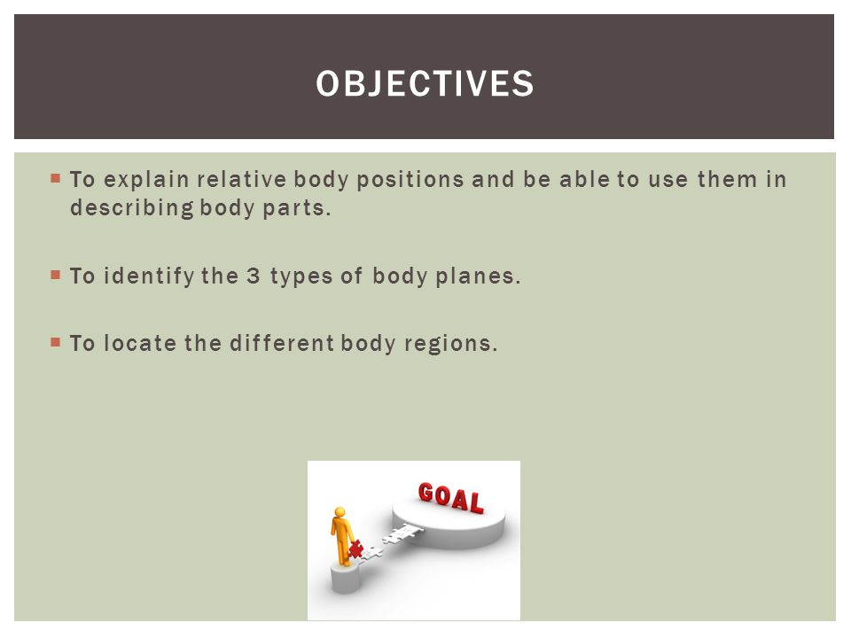 Objectives To explain relative body positions and be able to use them in describing body parts. To identify the 3 types of body planes.