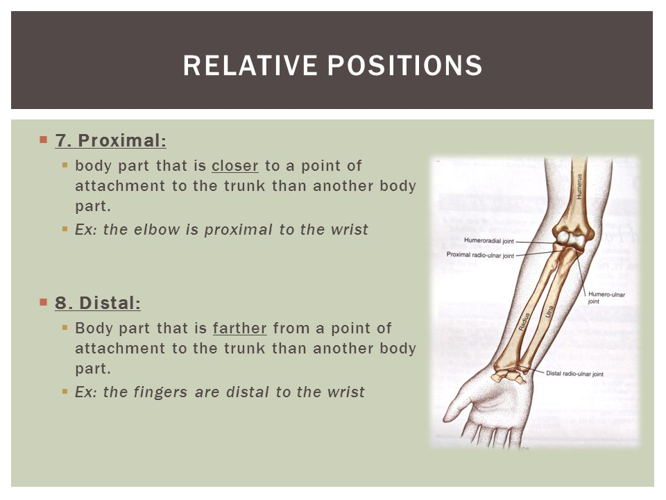 Relative positions 7. Proximal: 8. Distal: