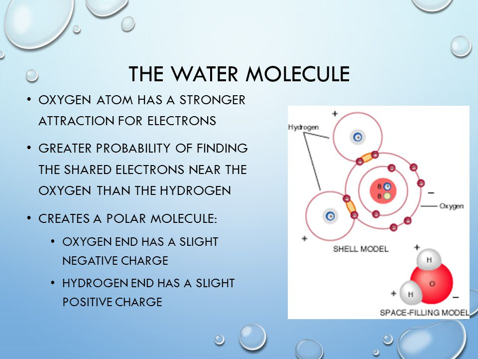 The water molecule Oxygen atom has a stronger attraction for electrons