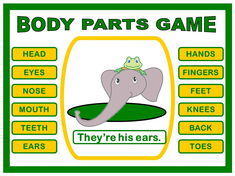 BODY PARTS GAME They're his ears. HEAD HANDS EYES FINGERS NOSE FEET