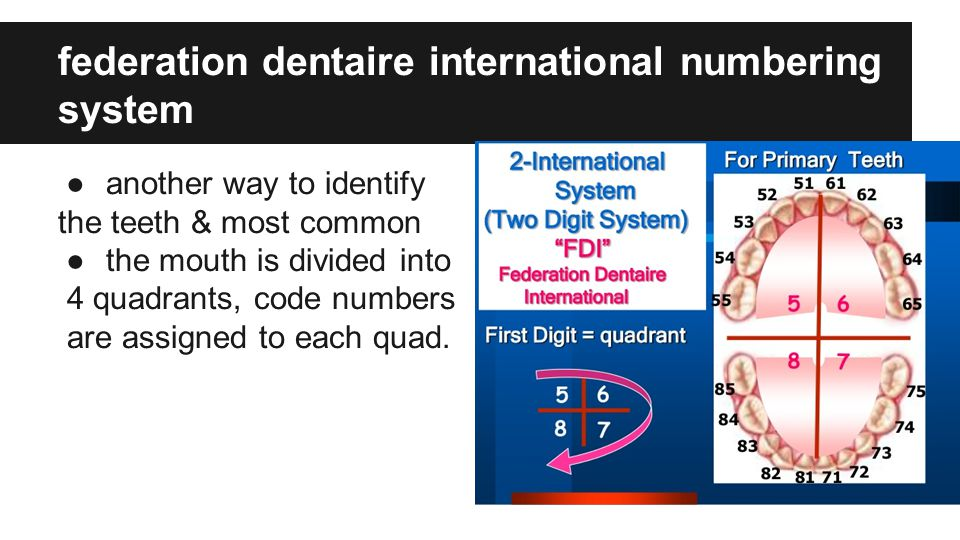 identifying teeth using the universal numbering system