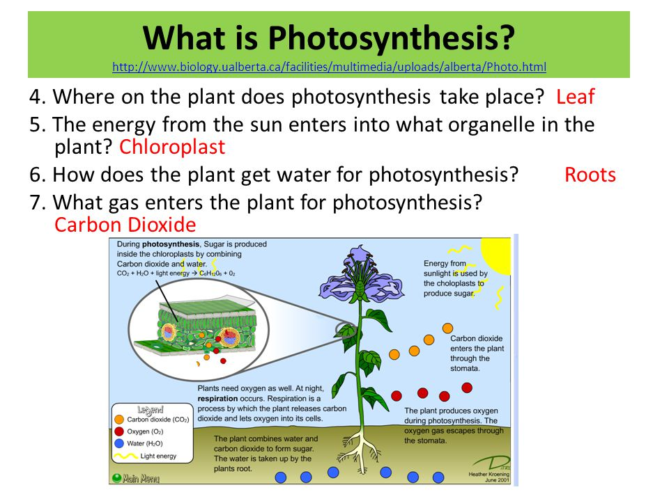 What is Photosynthesis. http://www. biology. ualberta