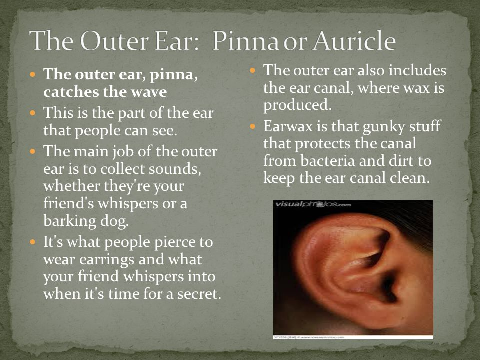The Outer Ear: Pinna or Auricle