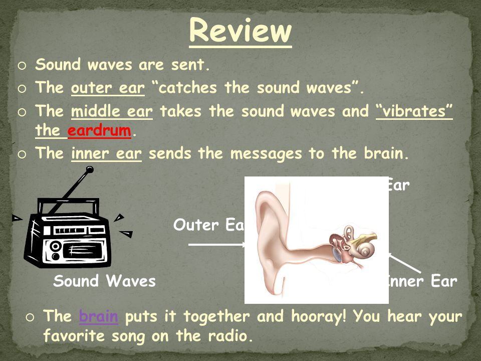 Review Sound waves are sent. The outer ear catches the sound waves .