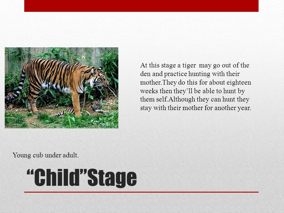 child by tiger full text