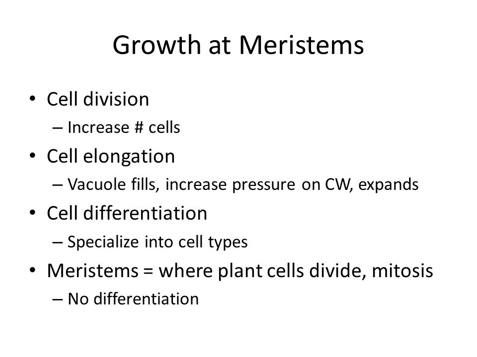 Growth at Meristems Cell division Cell elongation Cell differentiation