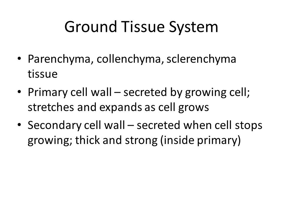 Ground Tissue System Parenchyma, collenchyma, sclerenchyma tissue