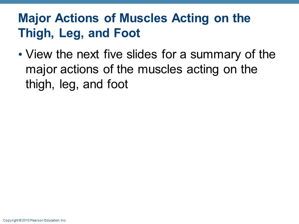 Major Actions of Muscles Acting on the Thigh, Leg, and Foot